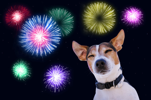 Keep Your Dog Calm During Fireworks