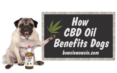 How CBD Oil Benefits Dogs