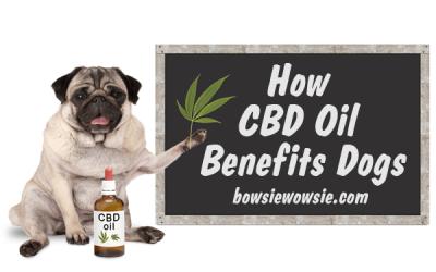 How CBD Oil Benefits Dogs
